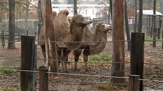 A nyíregyházi lett Európa legjobb állatkertje