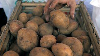 Kanada'da patates kıtlığı yaşanıyor