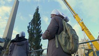 Un árbol de Navidad de 23 metros llega al Vaticano