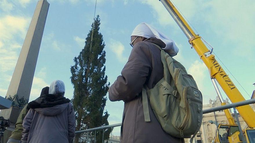На главной площади Ватикана установили рождественскую ёлку