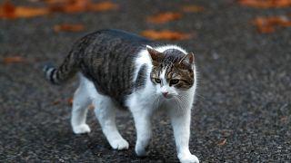ABD'li bilim insanı kedi dilinden ilham alarak fırça geliştirdi