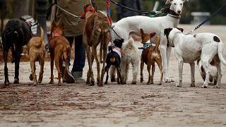 Bezárják Dél-Korea legnagyobb kutyvágóhídját