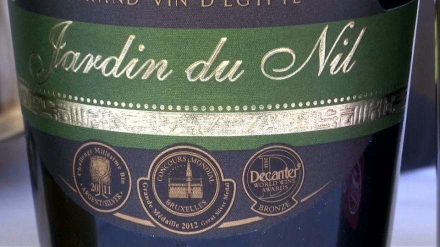 كروم النيل تعتمد الموروث الفرعوني لتطوير صناعة النبيذ من عنب البناتي