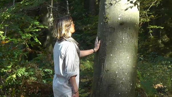 بلجيكا: العلاج بالغابات أو حمام الغابات ممارسة جديدة تساعد على الرفاهية والإسترخاء النفسي