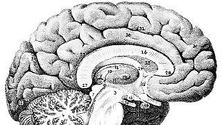 İnsan beyninde daha önce bilinmeyen bir bölge keşfedildi