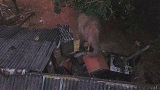Um elefante macho tem espalhado o terror numa aldeia chinesa
