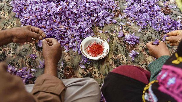 یک عضو اتاق بازرگانی: زعفران ایران با نام افغانستان صادر میشود