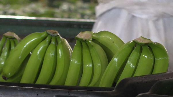 """""""A banana pode ser o novo petróleo verde de Angola"""""""