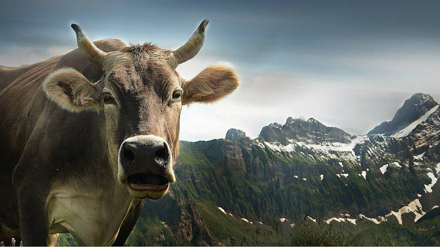 Swiss 'say no' to more sovereignty — and cow horns — in referendums