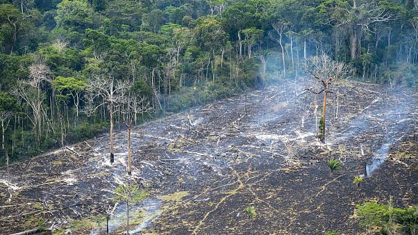 Em um ano, Amazónia perde área equivalente a cinco vezes São Paulo
