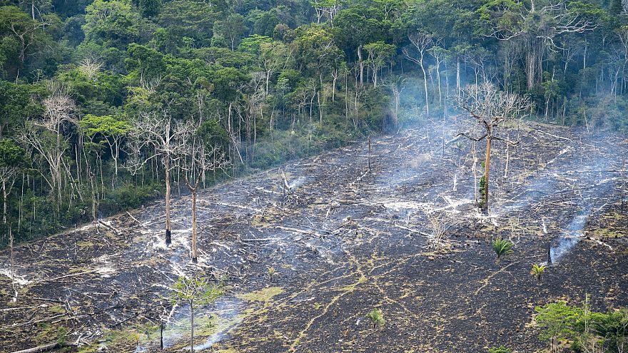 Une déforestation galopante en Amazonie