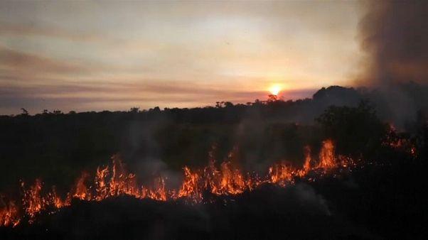 Бразилия теряет тропические леса