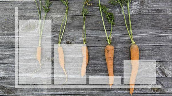 أوروبا: تعرف على الدول المتصدرة لقائمة التغذية المستدامة عام 2018