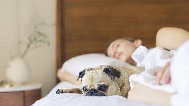 دراسة: مشاركة السرير مع الكلاب يحسن النوم عند المرأة