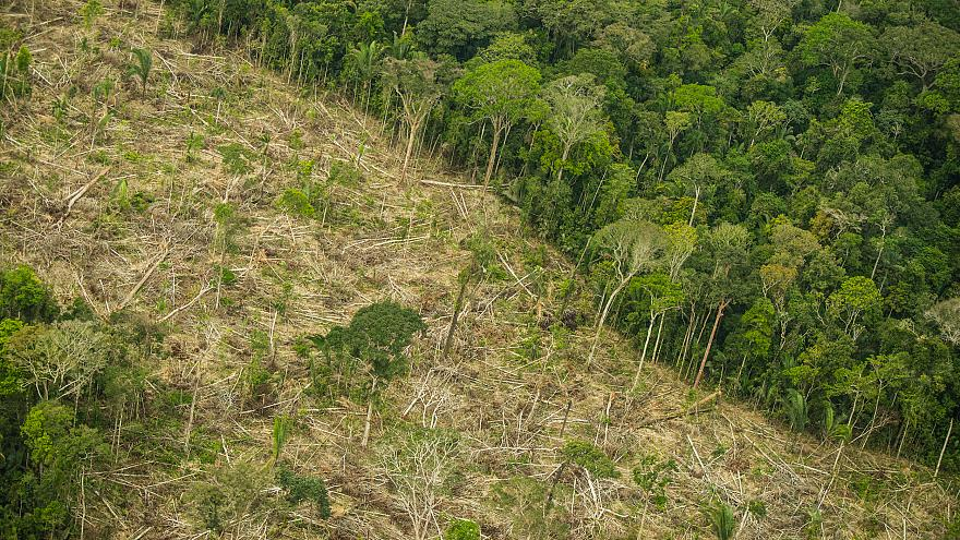 In Pictures: Deforestation in Brazil's rainforest is close to five times the size of London