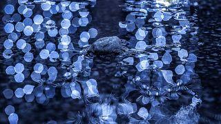 Photographer Daniel Grecu's lens for mother nature