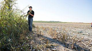 Güney Afrikalı beyaz çiftçiler, toprakların tazminatsız istimlak edilmesine karşı dava açtı