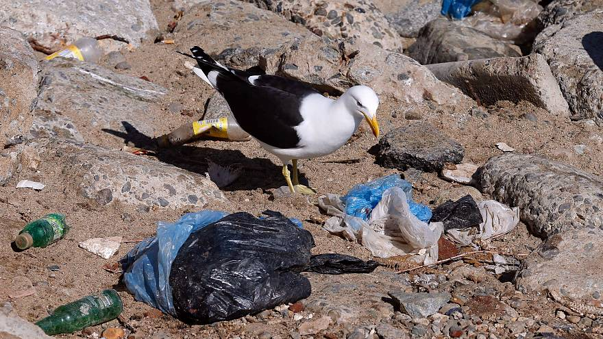 42% of plastic waste is recycled in the EU according to Eurostat.