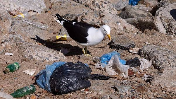 Plastikabfälle: Welches EU-Land recycelt am meisten?