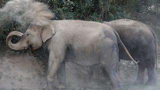 Fil kendisine çarpan sürücüyü öldürdü