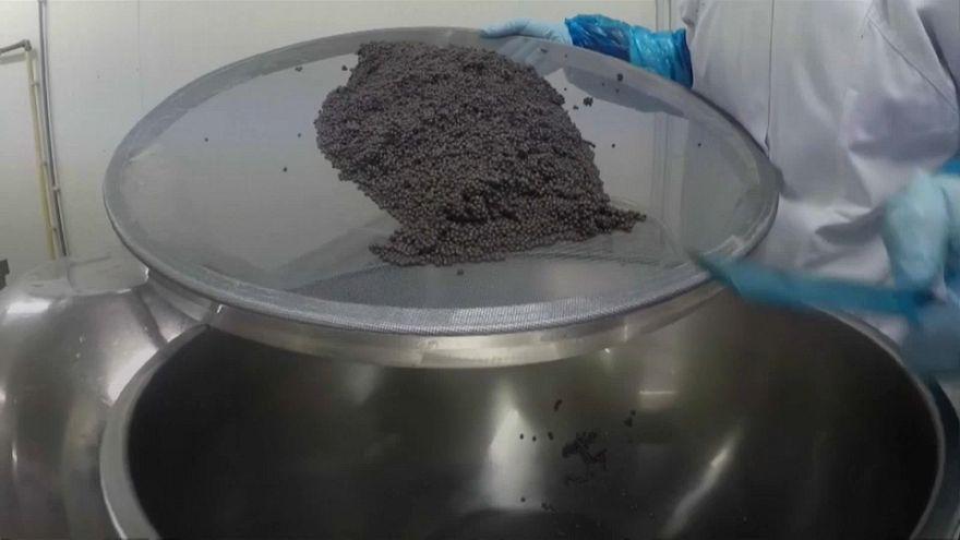 Belgian caviar producers prepare for bumper Christmas period