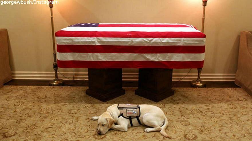 كلبة بوش بجوار نعشه لا تفارقه