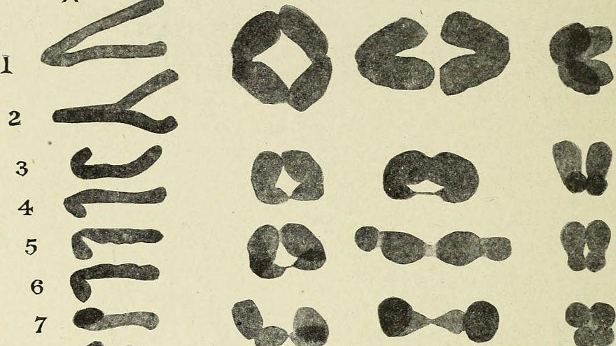 دراسة ألمانية: هذه الممارسات الرياضية تسهم في إبطاء شيخوخة خلايا الجسم