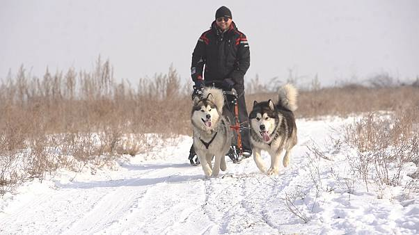 Dog sledding in Kazakhstan takes off