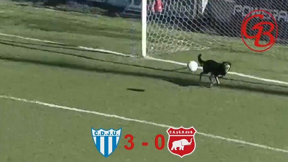 فيديو: في الأرجنتين يتقن الجميع كرة القدم ... حتّى الكلاب!