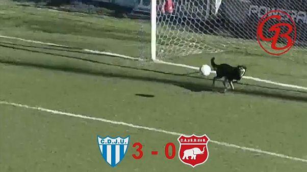 فيديو: في الأرجنتين يتقن الجميع كرة القدم...حتّى الكلاب!