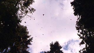 عندما يحل الشتاء الفراشات تدخل في سبات والحرارة تتهاوى إلى 42 درجة تحت الصفر