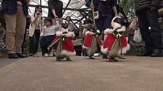 Если бы Санта-Клаус был пингвином