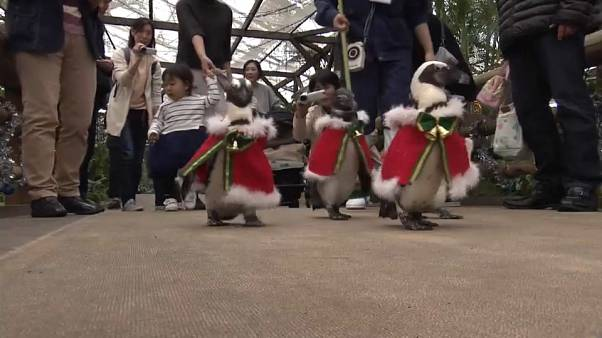 Big in Japan - penguins dressed as santa