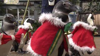 Pinguin-Weihnachtsmänner watscheln durch Vogelpark