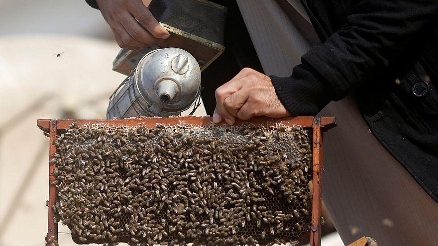 Dünyanın ilk arı aşısı yolda