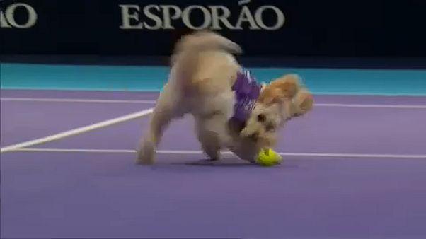 Kutyák szedtek labdát a világklasszis teniszezőknek