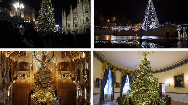 Best Christmas Trees.Vote Now Which Cities Have The Best And Worst Christmas