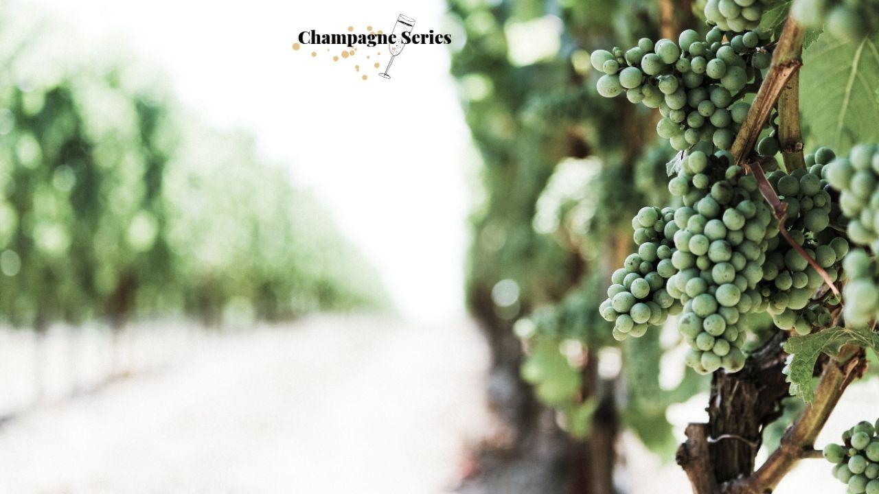 Femme de Champagne - Part 1