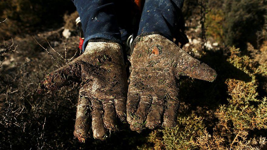 Dünyanın en büyük eldiven üreticisinde göçmen işçi skandalı