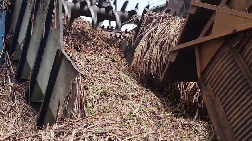 فيديو: تعرف على الجزيرة التي استبدلت قصب السكر بالنفط!