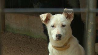 Nem adnak örökbe kutyát karácsonykor a német menhelyek
