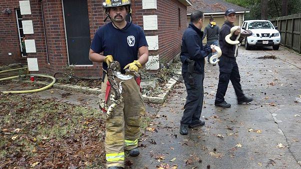 ABD'de yangın çıkan evde mahsur kalan 100 yılan kurtarıldı