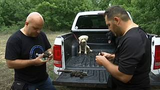 Truffle hunters examine their wares