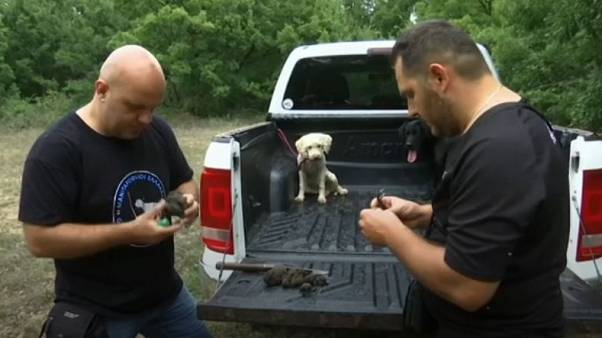 Truffle hunters examine their wares