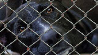 Tierschutz: Kein Welpe unterm Weihnachtsbaum