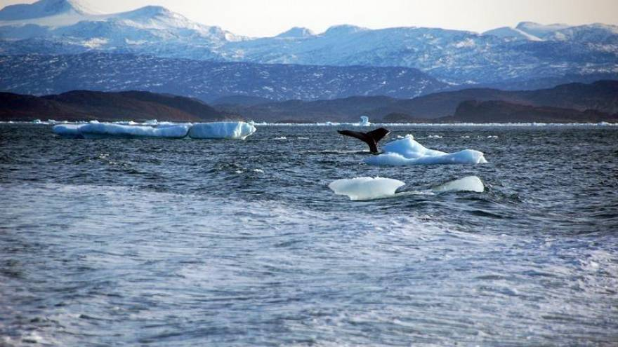 Kuzey Kutbu, son 5 yılda tarihinin en sıcak dönemini geçirdi