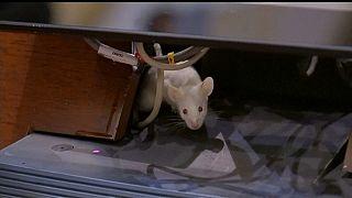 Des souris s'invitent au Congrès colombien