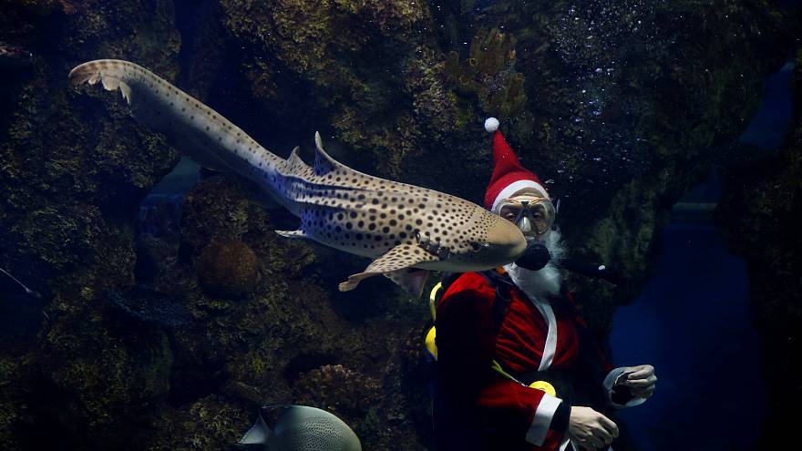 بابانوئل در محفظه ماهیها در آکواریوم ملی مالت