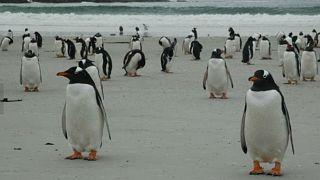 ¿Quieres comprar una isla? Hay una en venta en las Malvinas con cinco especies de pingüinos