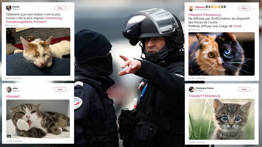Strasbourg attack: Cat images flood Twitter to protect police as they hunt suspect